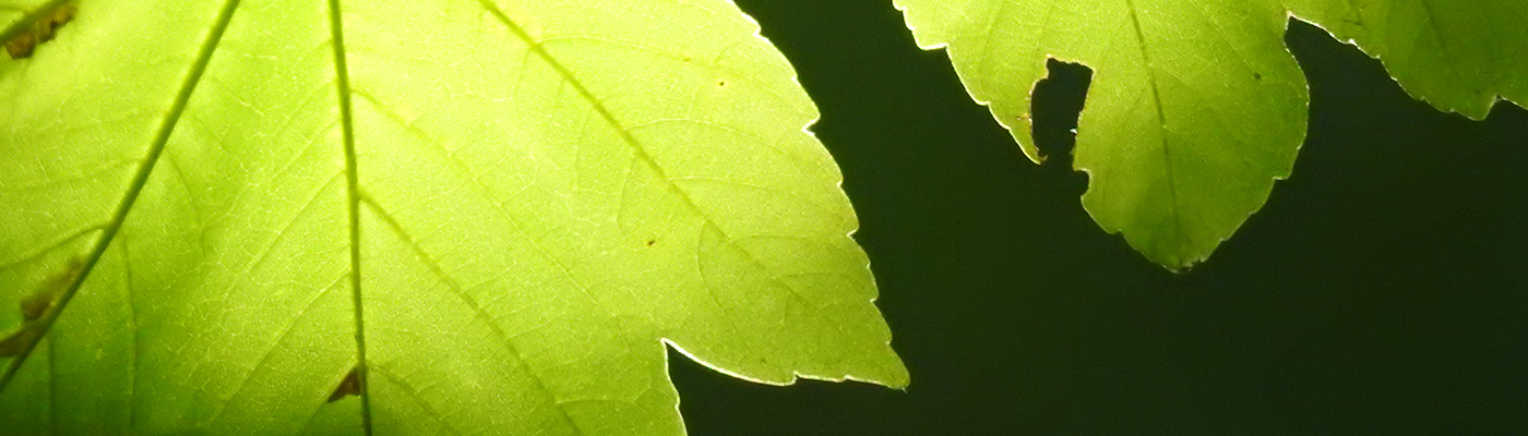 Pflanzen begegnen